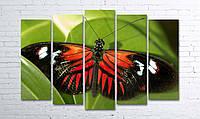 Модульная картина на холсте 5 в 1 Бабочка 100х150 см (секции разного размера)