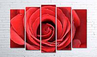 Модульная картина на холсте 5 в 1 Большая роза 100х150 см (секции разного размера)