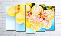Модульная картина на холсте 5 в 1 Орхидеи 100х150 см (секции разного размера)