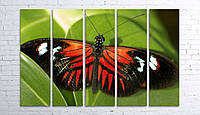 Модульная картина на холсте 5 в 1 Бабочка 100х150 см