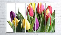 Модульная картина на холсте 5 в 1 Тюльпани на белом 100х150 см