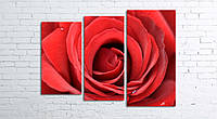 Модульная картина на холсте 3 в 1 Большая роза 80х106 см (секции разного размера)