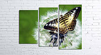 Модульная картина на холсте 3 в 1 Бабочка на одуванчике 80х106 см
