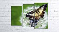 Модульная картина на холсте 3 в 1 Бабочка на одуванчике 80х106 см (секции разного размера)