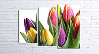 Модульная картина на холсте 3 в 1 Тюльпани на белом 80х106 см (секции разного размера)