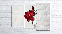 Модульная картина на холсте 3 в 1 Красный цветок в белой вазе 80х106 см
