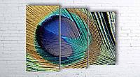 Модульная картина на холсте 3 в 1 Перо павлина 100х130 см (секции разного размера)