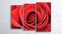 Модульная картина на холсте 3 в 1 Большая роза 100х130 см (секции разного размера)