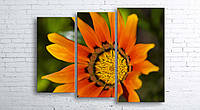 Модульная картина на холсте 3 в 1 Оранжевый цветок 100х130 см (секции разного размера)