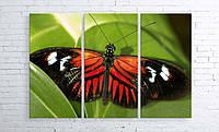 Модульная картина на холсте 3 в 1 Бабочка 100х150 см