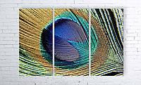 Модульная картина на холсте 3 в 1 Перо павлина 100х150 см