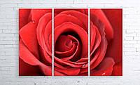 Модульная картина на холсте 3 в 1 Большая роза 100х150 см