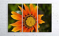 Модульная картина на холсте 3 в 1 Оранжевый цветок 100х150 см