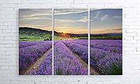 Модульная картина на холсте 3 в 1 Лавандовое поле 100х150 см