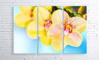 Модульная картина на холсте 3 в 1 Орхидеи 100х150 см