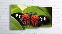 Модульная картина на холсте 3 в 1 Бабочка 100х160 см (секции разного размера)