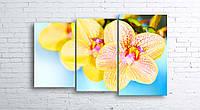 Модульная картина на холсте 3 в 1 Орхидеи 100х160 см (секции разного размера)