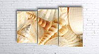 Модульная картина на холсте 3 в 1 Морские ракушки 100х160 см (секции разного размера)