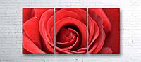 Модульная картина на холсте 3 в 1 Большая роза 100х180 см