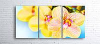 Модульная картина на холсте 3 в 1 Орхидеи 100х180 см