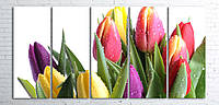 Модульная картина на холсте 5 в 1 Тюльпани на белом 100х200 см