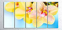 Модульная картина на холсте 5 в 1 Орхидеи 100х200 см