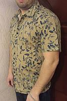 Рубашка Eskola с коротким рукавом(8203)