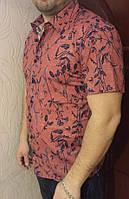 Рубашка Eskola с коротким рукавом(8203/1)