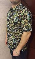Рубашка Eskola с коротким рукавом(7889)
