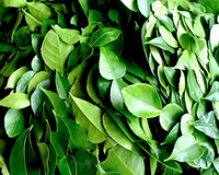 Каффир Лайма листья замороженные 500г
