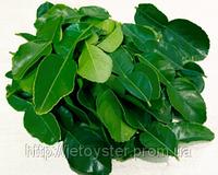 Каффир Лайма листья замороженные 50г