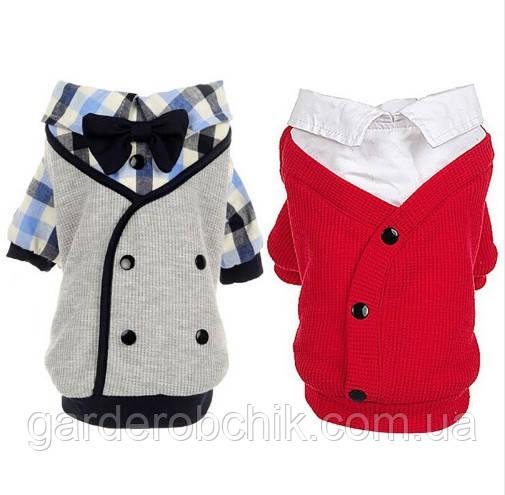 """Куртка, пальто для собаки """"Джентльмен"""". Одежда для животных"""