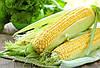Кения сняла пошлины для украинской кукурузы