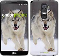 """Чехол на LG G2 Бегущий волк """"826c-37"""""""