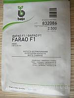 Семена капусты Фарао F1 2500с