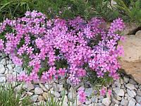 Цветы для озеленения Пион