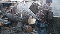 Уборка дачи Киев. Удаление фруктовых деревьев.