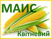 Семена кукурузы Квитнэвый 187 МВ (МАИС)