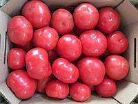 Семена томата Димероса F1 \ Demirosa F1 500 семян Enza Zaden