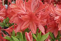 Фотопечать цветы 4