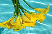 Фотопечать цветы 5