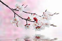 Фотопечать цветы 7