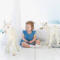 Аренда ручных белых козлят