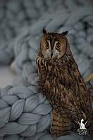 Аренда ручной ушастой совы