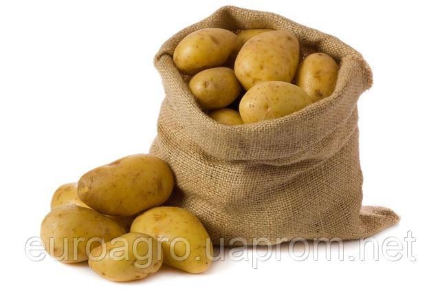 Новый гибрид картофеля от Бейо