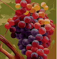 Рисование по номерам. Гроздь винограда 40х50см Идейка (MG1124)