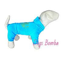Велюровый костюм D-11 для собак DogsBomba