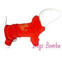 Велюровый костюм D-7 для собак DogsBomba