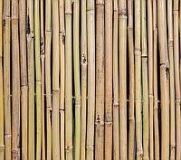 Бамбуковый забор, 6х1,5м