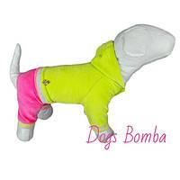 Велюровый костюм D-14 для собак DogsBomba